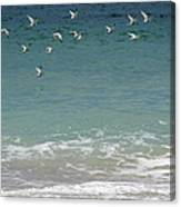 Gulls Flying Over The Ocean Canvas Print