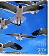 Gulls In Flight Canvas Print