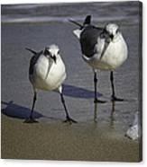 Gulls On The Beach Canvas Print