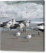 Gulls Terns Skimmers Canvas Print