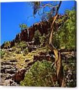 Gum Tree At Ellery Creek V2 Canvas Print