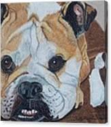 Gus - English Bulldog Commission Canvas Print