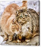 Gutter Kitties Five Canvas Print