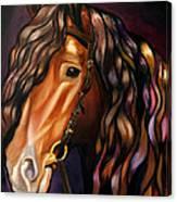Gypsy Vanner Canvas Print