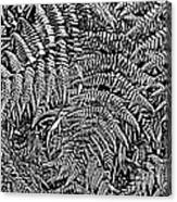 H Ferns Cont Z Canvas Print