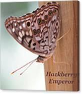 Hackberry Emperor Canvas Print