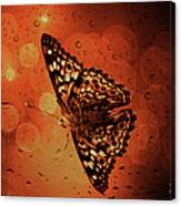 Hackberry Emperor - Asterocampa Celtis Canvas Print