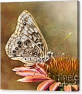 Hackberry Emperor Butterfly 2 Canvas Print