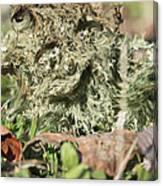 Hairy Moss Fairy Canvas Print