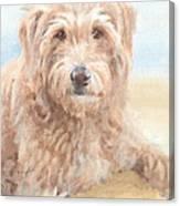 Hairy Sheepdog Watercolor Portrait Canvas Print