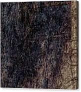 Hairy Window 1 Canvas Print