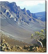 Haleakala Volcano And Chukar Maui Hawaii Canvas Print