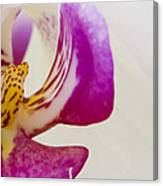Half An Orchid Canvas Print