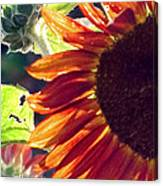 Half Of A Sunflower Canvas Print