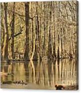 Hall Of Cypress Canvas Print