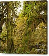 Hall Of Mosses 3 Canvas Print
