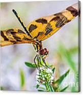 Halloween Banner Dragonfly Canvas Print