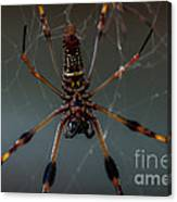 Halloween Spider Canvas Print