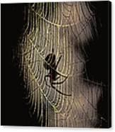 Halloween - Spider Canvas Print