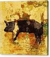 Swedish Hampshire Boar 4 Canvas Print