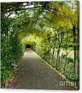 Hampton Court Palace Flower Tunnel Canvas Print