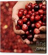 Handful Of Fresh Cranberries Canvas Print