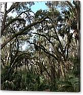 Hang Moss Tree Trail Canvas Print