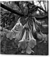 Hangin Bells Canvas Print