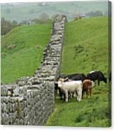 Hangin Out At Hadrians Wall England Scotland Canvas Print