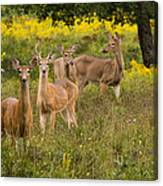 Hangin With The Ladies Canvas Print