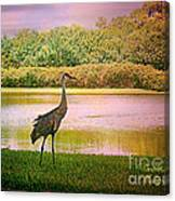 Hanging Around The Beautiful Florida Sand Crane Canvas Print