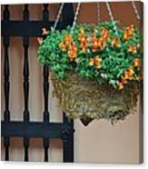 Hanging Flowers And Black Gate Canvas Print