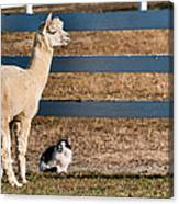 Hanging Out Canvas Print