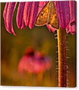 Hanging Out To Dry Canvas Print