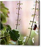 Hanging Pot With Bee Canvas Print