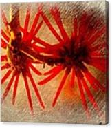 Hanging Spider Blooms Canvas Print