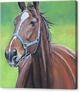 Hanover Shoe Farm Horse Canvas Print
