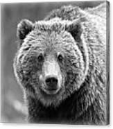 Happy Bear Canvas Print