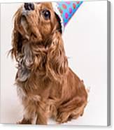 Happy Birthday Dog Canvas Print