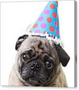 Happy Birthday Pug Card Canvas Print