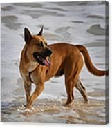 Happy Dogs 5 Canvas Print