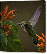 Happy Little Hummingbird  Canvas Print