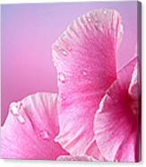 Happy Mother's Day Macro Pink Rose Petals Canvas Print