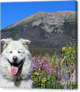 Happy Mountain Dog Canvas Print