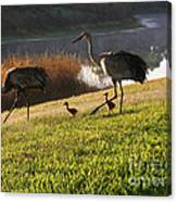 Happy Sandhill Crane Family - Original Canvas Print