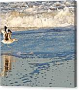 Happy Shorebird Canvas Print
