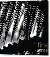 Hapu'u Fern Silhouette Canvas Print
