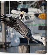 Harbor Pelican And Gull Canvas Print