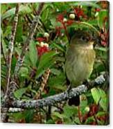Hardly The Least Least Flycatcher Canvas Print