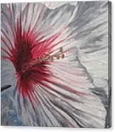 Hardy Hibiscus Canvas Print